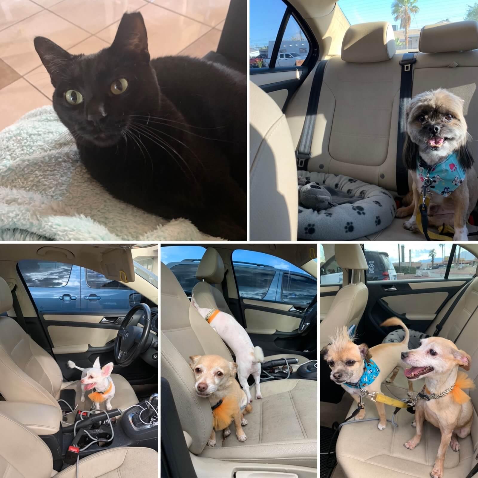 Tanenichian pets